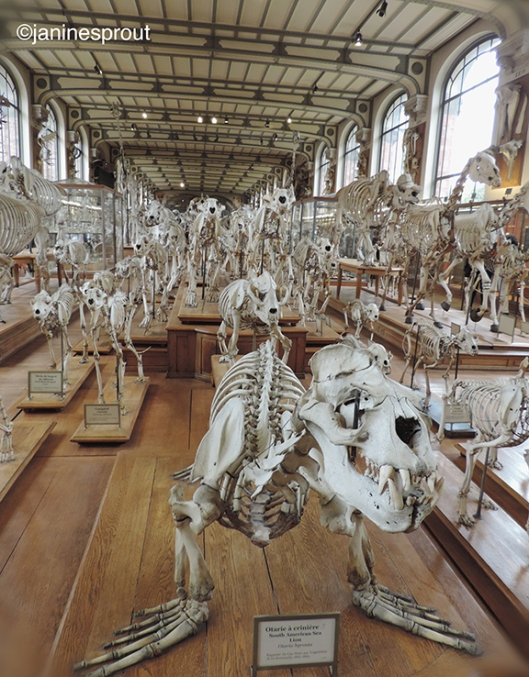 museumnaturelle