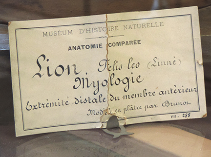 museumnaturelle2