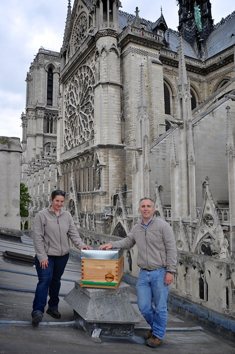 bee photo Notre Dame