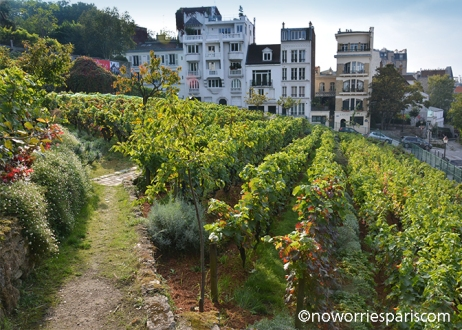 montmartre vineyard